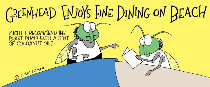 Greenhead fly enjoys dining on the beach