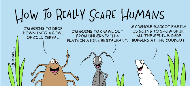 Maggot Scare