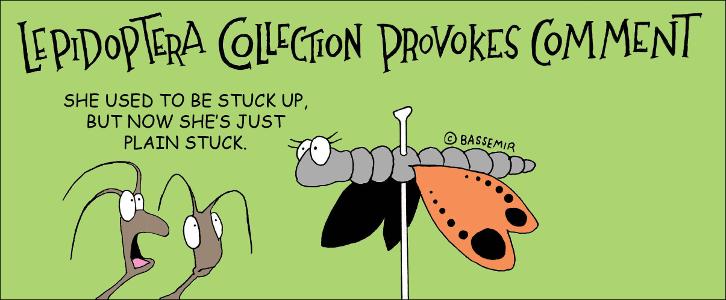 Moth.Stuck.png