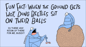 D.Beetle.ball.png