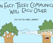 Fun Fact: Trees Communicate With Each Other